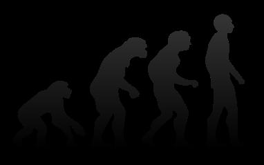 Human_evolution.svg